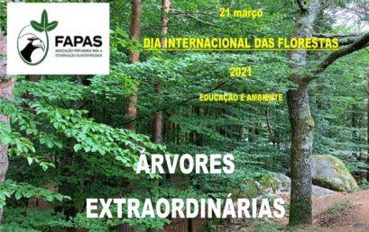 Árvores Extraordinárias | Dia Internacional das Florestas | 21 de Março